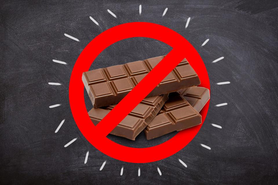 cao nao pode comer chocolate