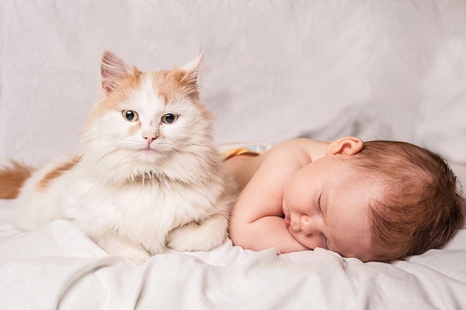 Gatos e Recem Nascidos