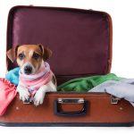 Hotel para cães e Hotel para gatos
