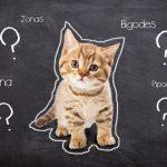 qual o nome do seu gato