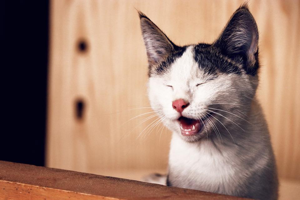 registo obrigatorio de caes e gatos